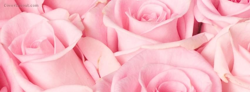 lot_pink_rose_flowers.jpg